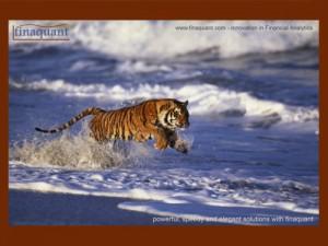 finaquant tiger postcard