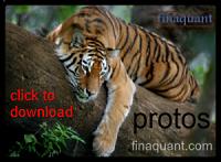 Finaquant Protos installation file